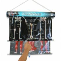 Caly - 3 planches Petit cours d'anatomie et stéthoscope - Dès 5 ans