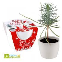Radis et Capucine - Sapin de Noël à faire pousser