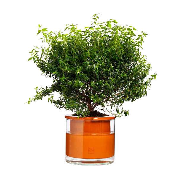 Pot En Terre Cuite Avec Réservoir Deau M