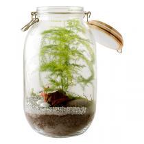 Radis et Capucine - Kit terrarium Asparagus à faire soi-même