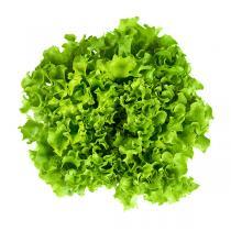 Fruits & Légumes du Marché Bio - Salade Batavia Blonde. France
