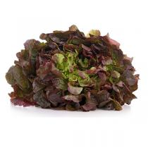 Fruits & Légumes du Marché Bio - Salade Feuille de chêne Rouge. France
