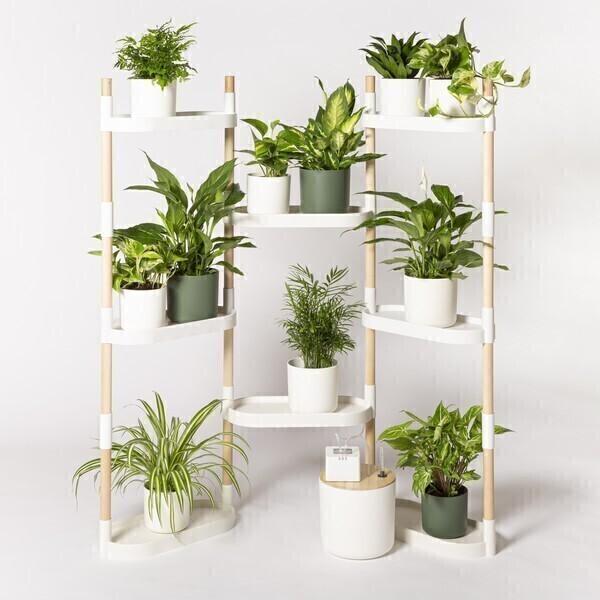 Citysens - Étagère 8 plateaux arrosage auto avec plantes Blanc