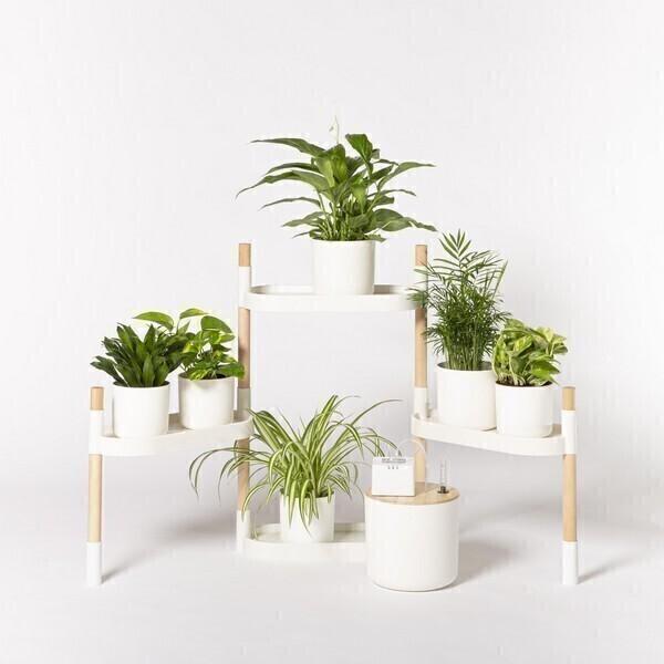 Citysens - Étagère 4 plateaux arrosage auto avec plantes Blanc