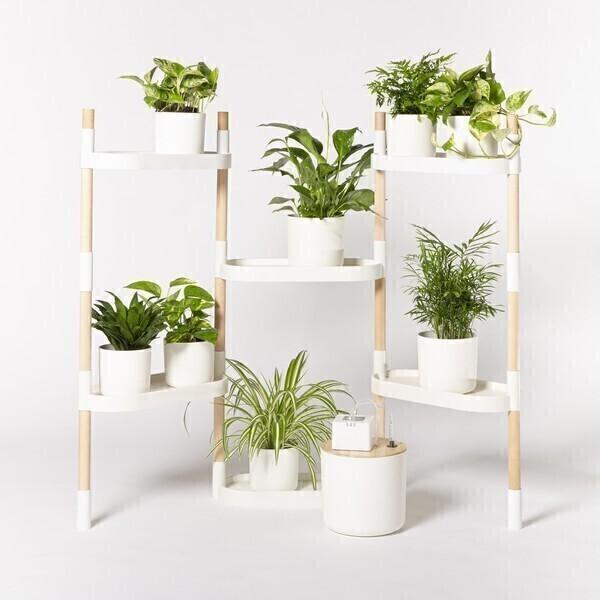 Citysens - Étagère 6 plateaux arrosage auto avec plantes Blanc