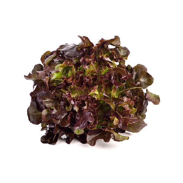 Fruits & Légumes locaux IDF Bio - Salade batavia rouge. Ile de France