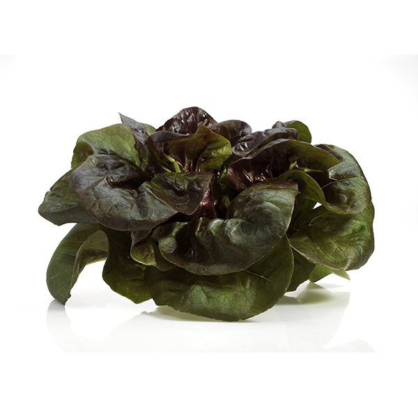 Fruits & Légumes locaux IDF Bio - Salade rougette. Ile de France