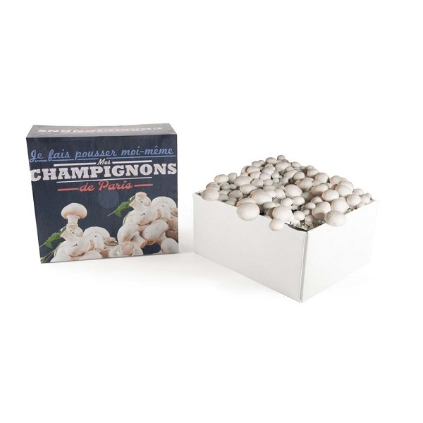 Radis et Capucine - Kit de culture Champignons de Paris bio 30 x 27 x 16cm