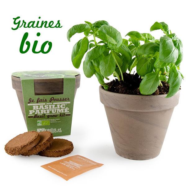 Radis et Capucine - Pot Terre cuite Basalte 13cm Basilic grand vert bio
