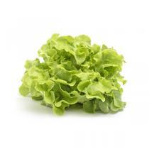 Fruits & Légumes du Marché Bio - Salade Feuille de chêne blonde. France