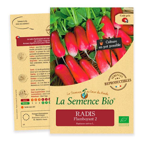 La Semence Bio - Graines de Radis Flamboyant 2