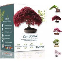 Cultivea - Mini Kit Zen Graines Bonsai