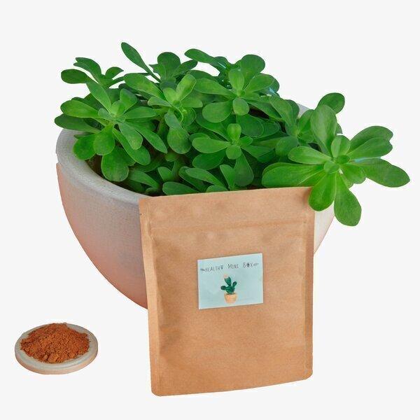 Healthy mini box - Poudre de caroube bio 160 gr