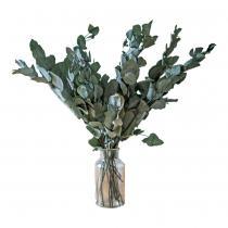 Réconciliation Végétale - Botte de fleurs sechees : Eucalyptus cinerea stabilise