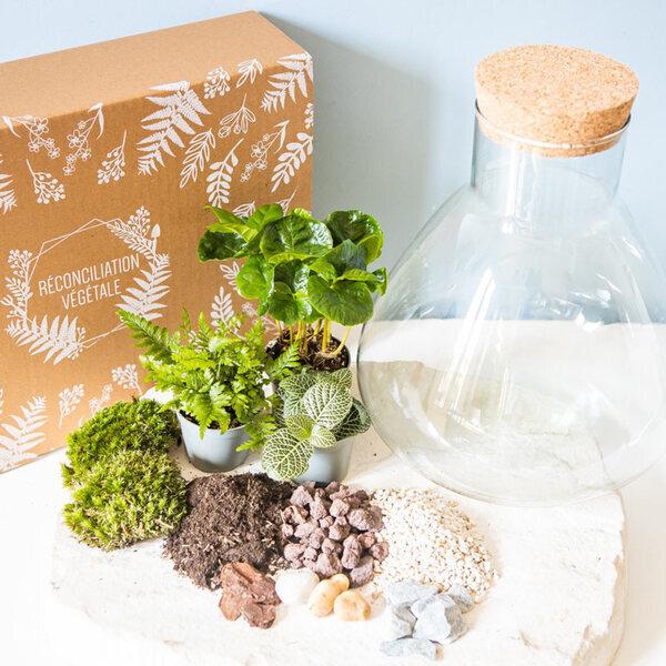 Réconciliation Végétale - Kit terrarium DIY 3 plantes Mini coffea Fougere et Fittonia Vert