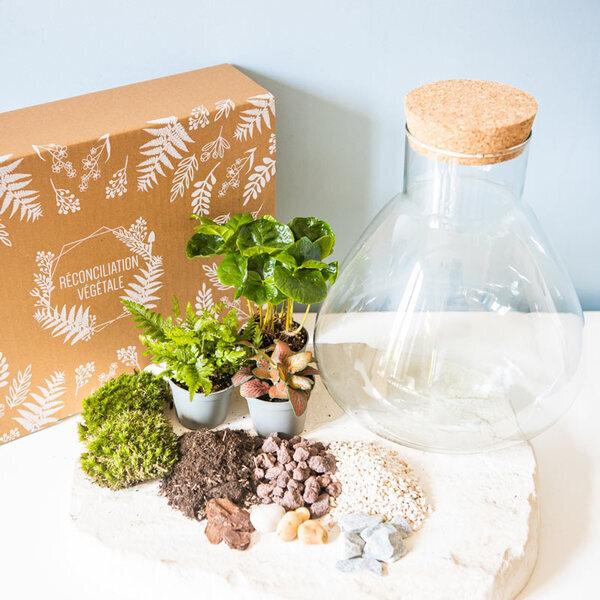 Réconciliation Végétale - Kit terrarium DIY 3 plantes Coffea, Fougere et Fittonia Rouge