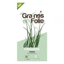 Graines en Folie - Graines de Ciboulette Commune