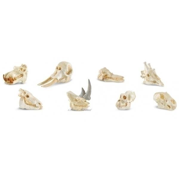 Safari - Figurines crânes de mammifères