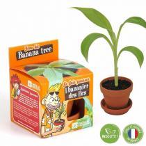 Radis et Capucine - Graines de Bananier à faire pousser - pot 8 cm