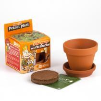 Radis et Capucine - Graines de Cacahuètes à faire pousser - pot 8 cm