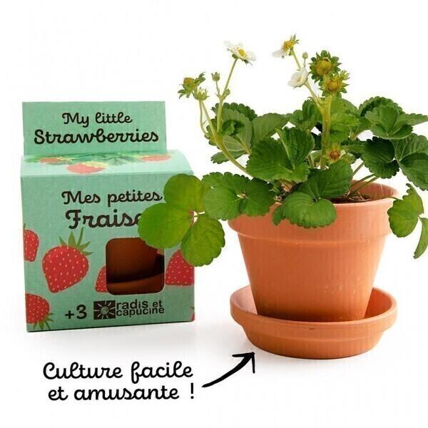 Radis et Capucine - Graines de Fraisier à faire pousser - pot 8 cm