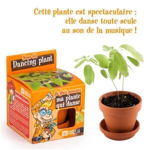 Radis et Capucine - Graines de plante qui danse à faire pousser - pot 8 cm