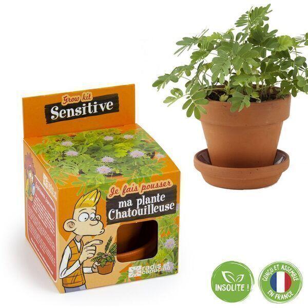 Radis et Capucine - Graines de Mimosa sensitive à faire pousser - pot 8 cm
