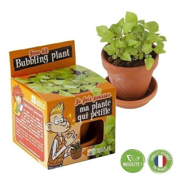 Radis et Capucine - Plante qui pétille à faire pousser - pot 8 cm