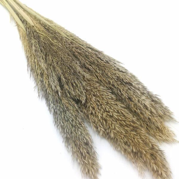 Réconciliation Végétale - Botte de fleurs séchées : Miscanthus sec naturel 6 tiges