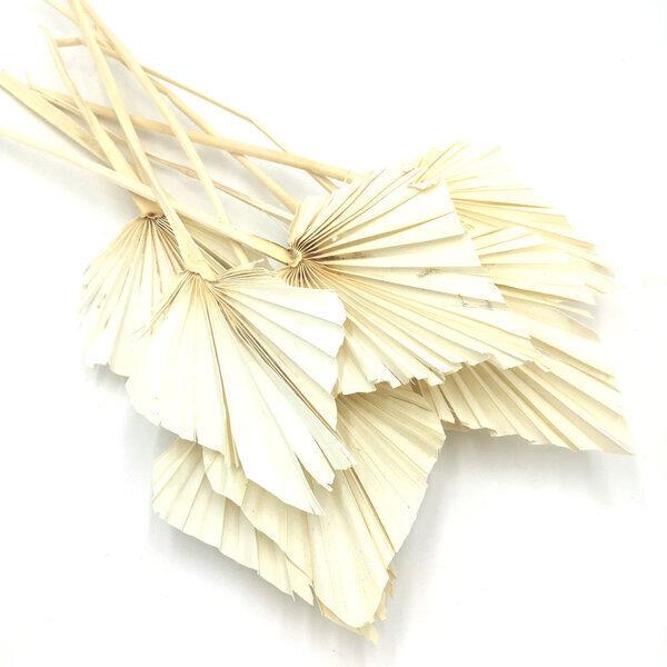 Réconciliation Végétale - Botte de fleurs séchées palmes blanches x10