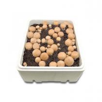 Achat nature - kit culture de champignons de paris blond BIO