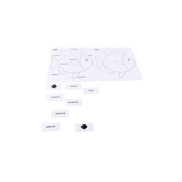 MontessoriSamuserAutrement - Cartes nomenclature Poisson