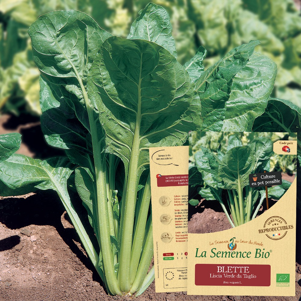 La Semence Bio - BLETTE Liscia Verde da Taglio Bio