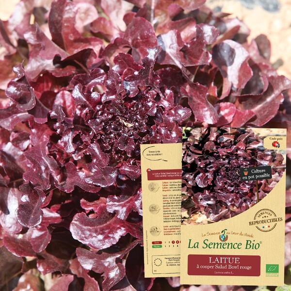La Semence Bio - LAITUE à couper Salad Bowl rouge Bio