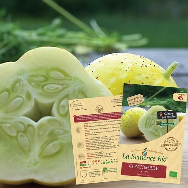La Semence Bio - CONCOMBRE Lemon Bio