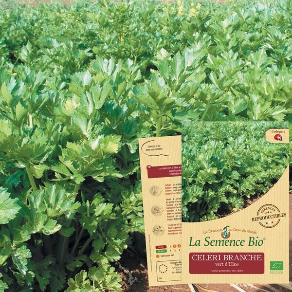 La Semence Bio - CELERI BRANCHE vert d'Elne Bio