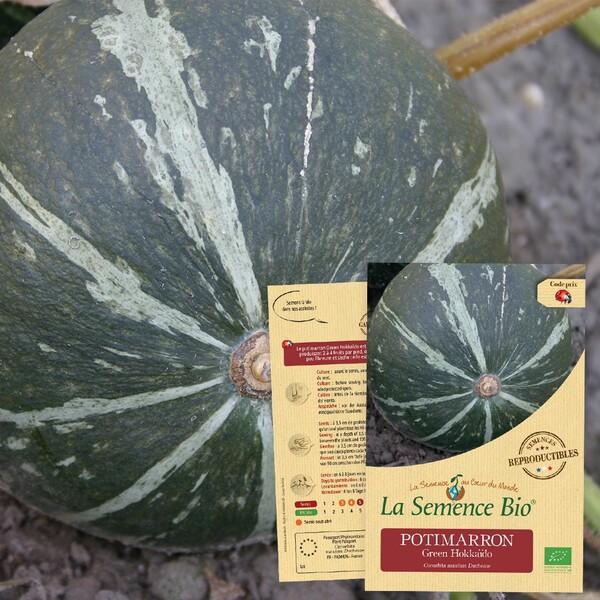 La Semence Bio - POTIMARRON Green Hokkaïdo Bio