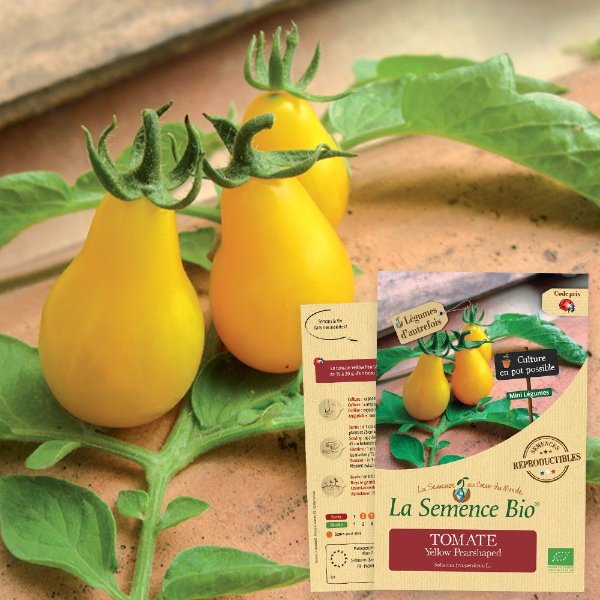 La Semence Bio - TOMATE Yellow Pearshaped Bio