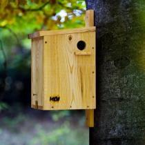Nestbox - Maison pour écureuils en pin massif