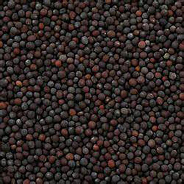 Vracbio - Moutarde Noire Graines Bio en Vrac 0,5 Kg
