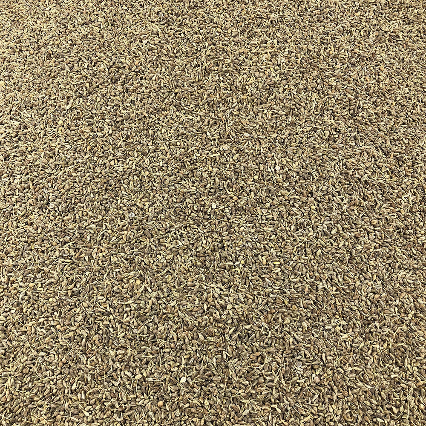 Vracbio - Anis Vert Graines Bio en Vrac 0,25 Kg