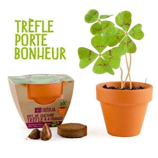 Radis et Capucine - Radis et Capucine - Trèfle à 4 feuilles en pot de culture terre