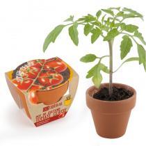 Radis et Capucine - Tomate cerise bio en pot de culture