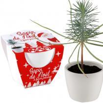 Radis et Capucine - Pot céramique blanc 8 cm - Sapin de Noël