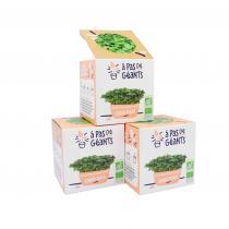 À pas de géants - 3 Kits culture micro-pousses Chou Kale