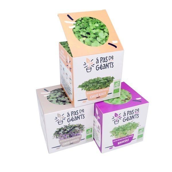 À pas de géants - Micropousses Brocoli, Kale et Chou Rouge