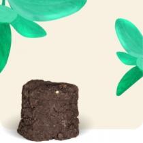 Urban Cuisine - Basilic Grand Vert Bio Motte