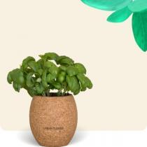 Urban Cuisine - Basilic Grand Vert Bio en Pot