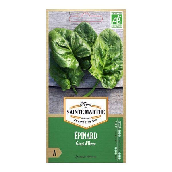 La ferme St-Marthe - Epinard Géant d'Hiver- Semences reproductibles bio