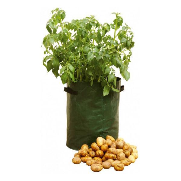Ecovi - Saca'patates